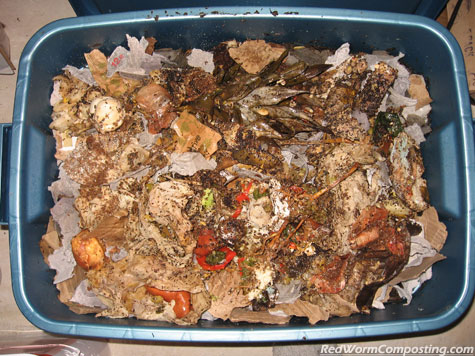Bokashi 'Compost' Added to Worm Bin