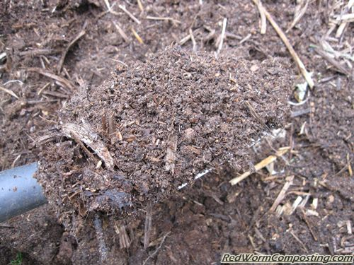 Cat Litter Vermicompost