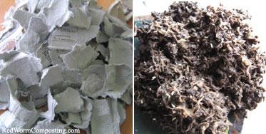 Egg Carton Cardboard Before & After Composting