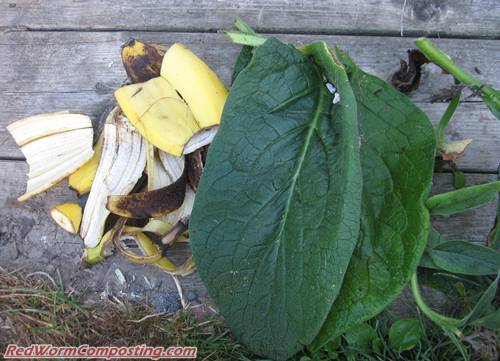 Comfrey and Banana Peels