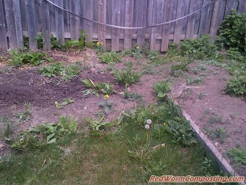 deep mulch gardening, deep mulch vermigardening | red worm composting, Design ideen