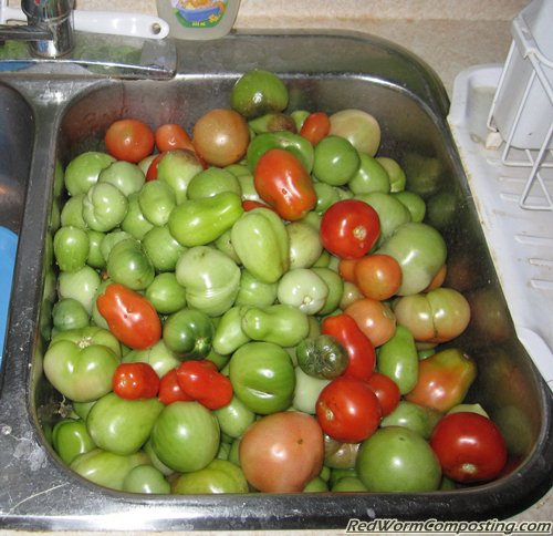 Sink Full Of Tomatoes