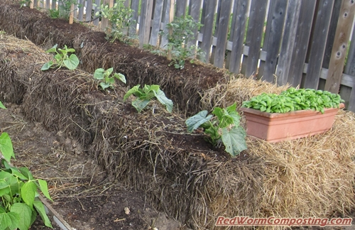 Hay Bale Vermigardening 7 14 15 Red Worm Composting