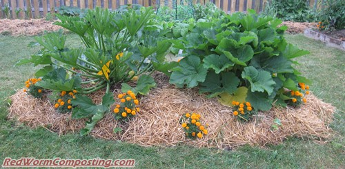 Lasagna gardening 07 18 11 red worm composting - Lasagna gardening in containers ...