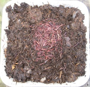 1/4 lb of worms