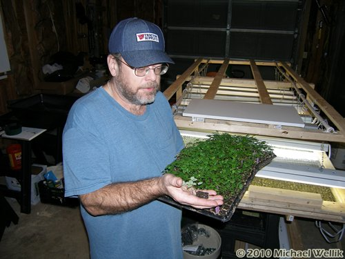 Michael Wellik Inspects Strawberry Seedlings