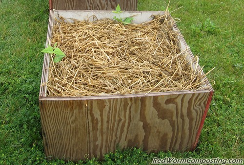 Worm Bed Potato Gardens Red Worm Composting