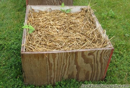 Worm Box Garden
