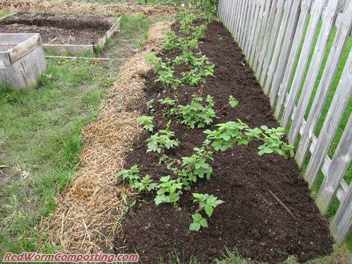 Sandbox Trench Excavation Red Worm Composting