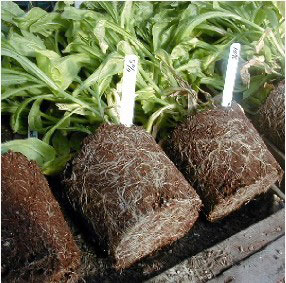 Worm Castings Boost Root Growth