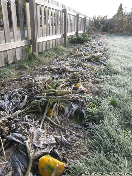 Frosty Vermicomposting Trench