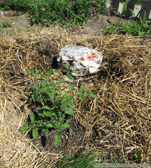 Burying Food Waste in Worm Composting Trench