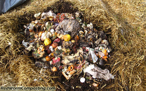 Food Waste Added to Winter Worm Bed