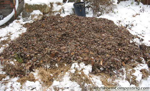 A layer of leaves over our winter worm bed