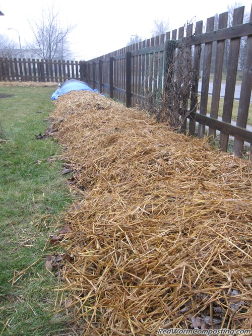 Winter Worm Windrow