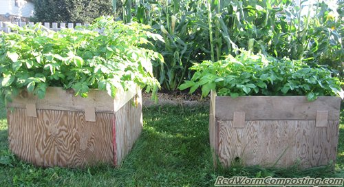 Worm Bed Potato Towers
