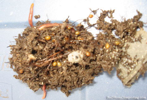 Clusters of Red Worm Cocoons